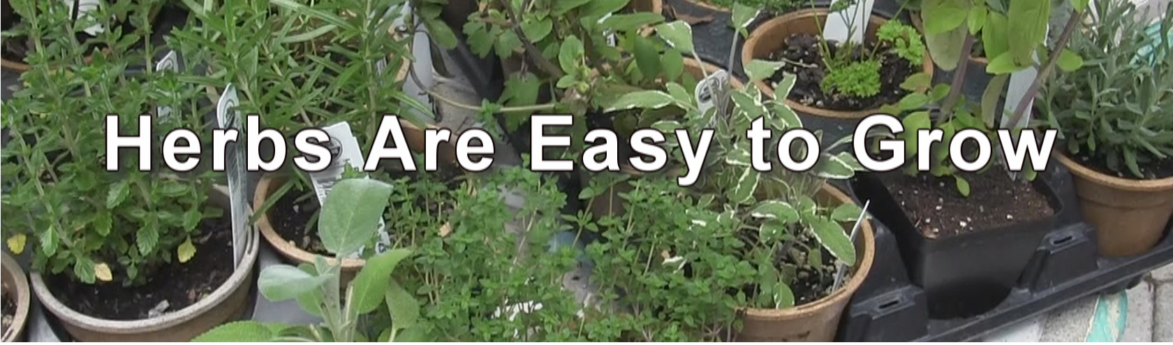 Herbs easy to grow